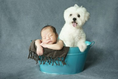 Pet Photographer | Newborn Photography